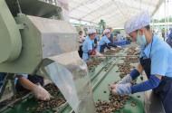 Hạt điều Việt Nam rộng cửa vào Mỹ