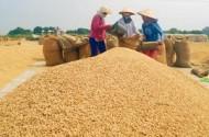 Đổi mới chính sách hỗ trợ nông dân sản xuất nông nghiệp