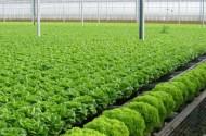 TPHCM sẽ hỗ trợ phát triển ngành chế biến lương thực - thực phẩm tinh