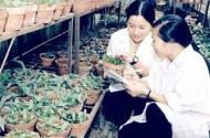 Nông nghiệp Việt Nam
