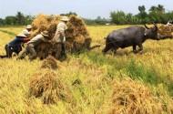 Hỗ trợ vốn đầu tư vào nông nghiệp