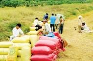 Hiệp hội gặp hạn, nông dân gặp nạn