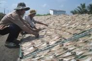 ĐBSCL: phải nhắm tới mô hình HTX nông nghiệp kiểu mới
