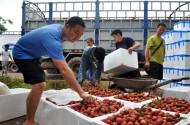 Xuất khẩu nông sản dễ vỡ vì đói thông tin