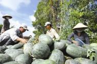 Sáu lý do dẫn đến rủi ro cho nông dân