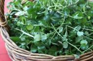 Lợi ích dinh dưỡng bất ngờ của rau cải xoong