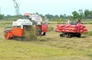Điểm nhấn tái cơ cấu ngành lúa gạo Sóc Trăng